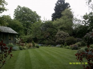 Garden in Hampstead we maintain