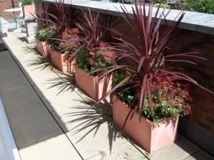 Balcony pots and plants